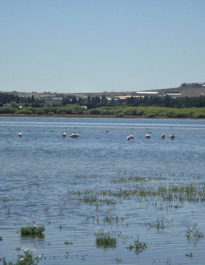Vistas al Lago Argentino